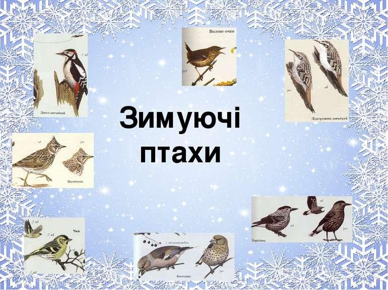 Зимуючі птахи