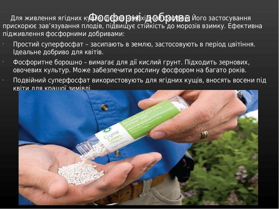 Фосфорні добрива Для живлення ягідних кущів, дерев необхідний фосфор. Його за...