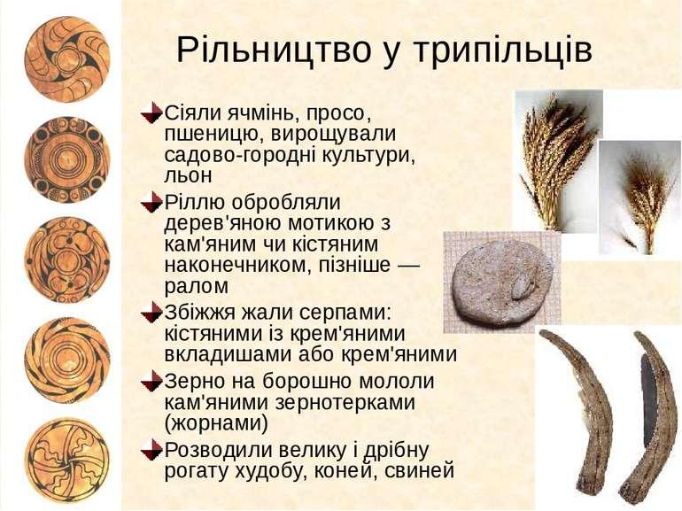 Рільництво у трипільців Сіяли ячмінь, просо, пшеницю, вирощували садово-город...