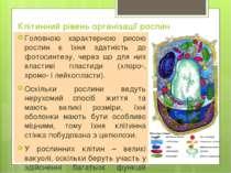 Клітинний рівень організації рослин Головною характерною рисою рослин є їхня ...