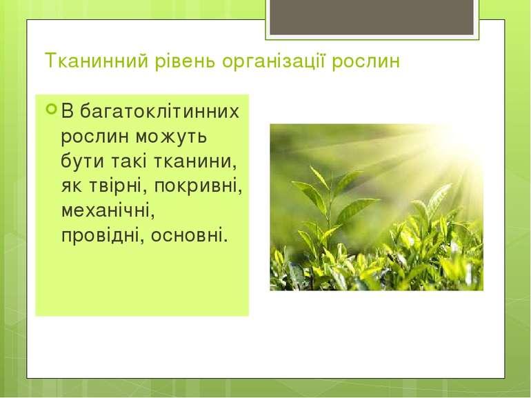 Тканинний рівень організації рослин В багатоклітинних рослин можуть бути такі...