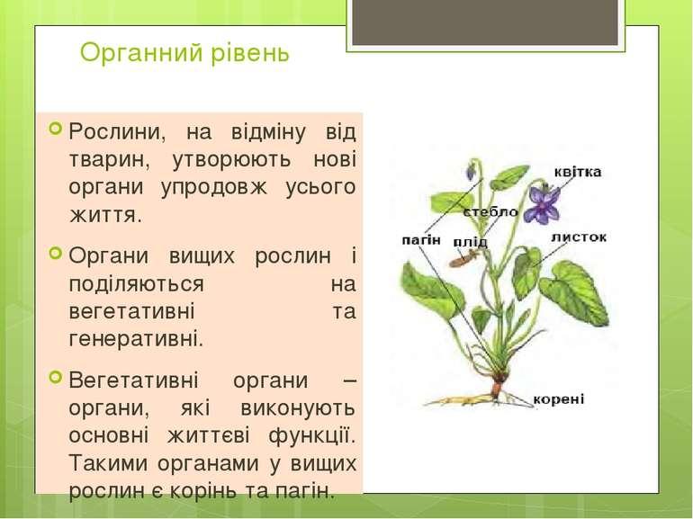 Органний рівень Рослини, на відміну від тварин, утворюють нові органи упродов...