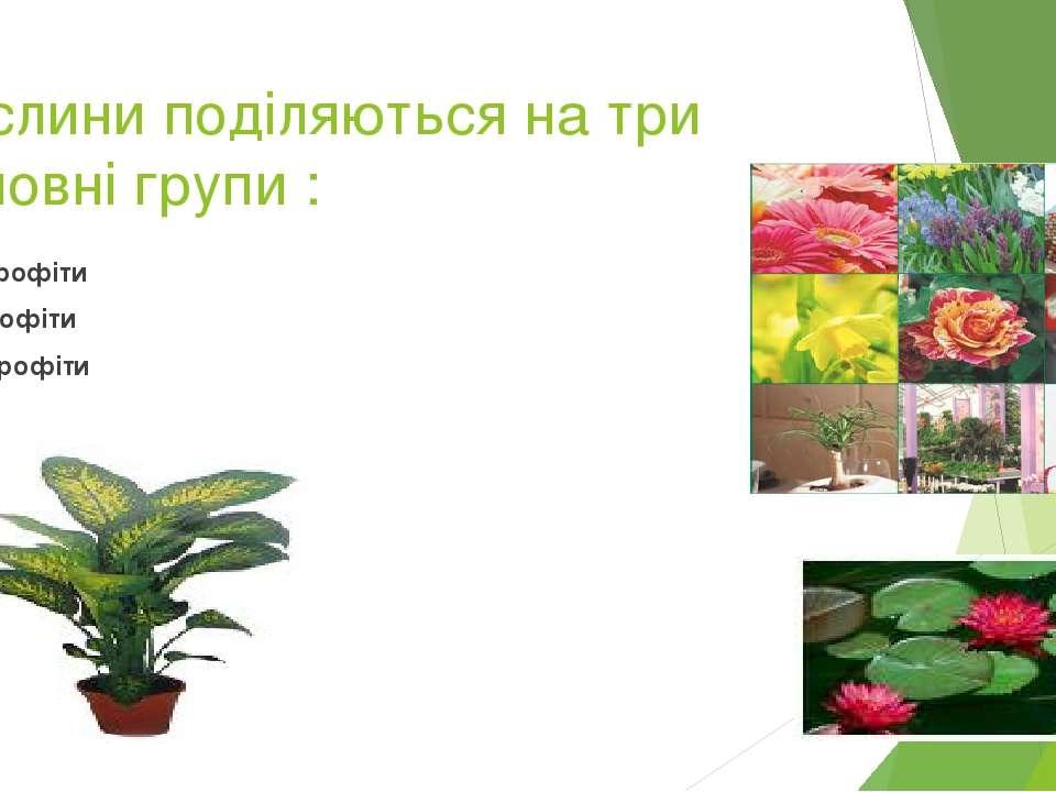 Рослини поділяються на три основні групи : Гідрофіти мезофіти ксерофіти