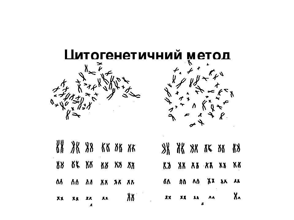 Цитогенетичний метод (дослідження хромосом). Нормальний каріотип людини