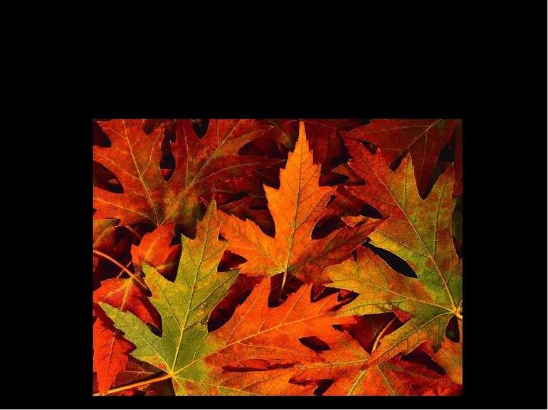 Апоптоз В перекладі з грецької – опадіння, листопад