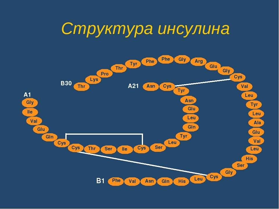 Структура инсулина Glu Thr Lys Thr Tyr Phe Phe Gly Arg Glu Gly Cys Val Leu Ty...