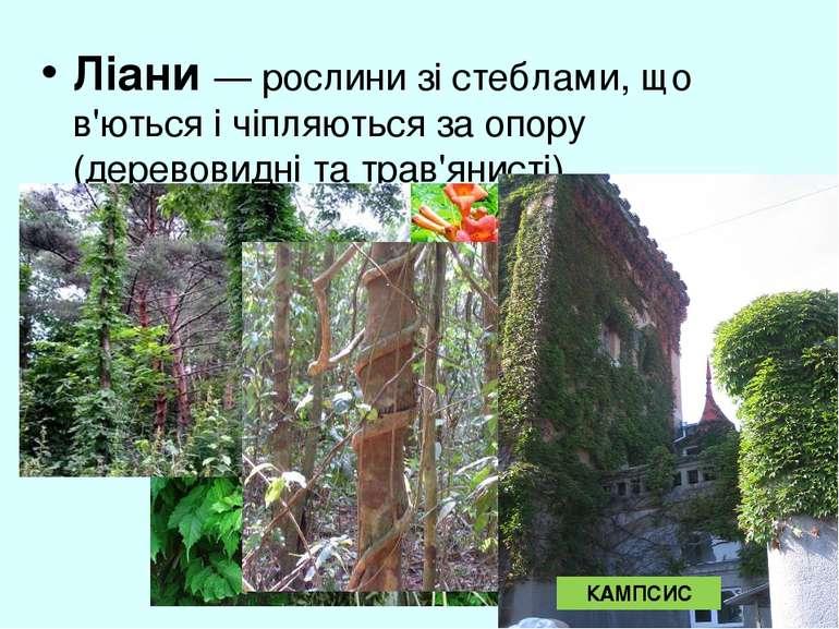 Ліани — рослини зі стеблами, що в'ються і чіпляються за опору (деревовидні та...