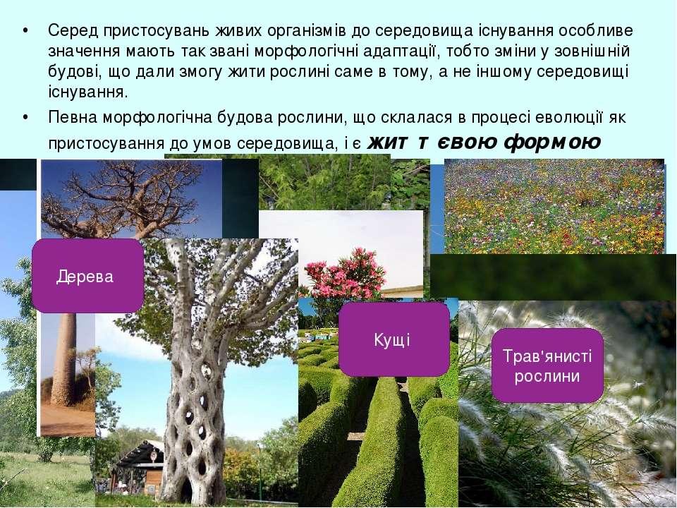 Серед пристосувань живих організмів до середовища існування особливе значення...