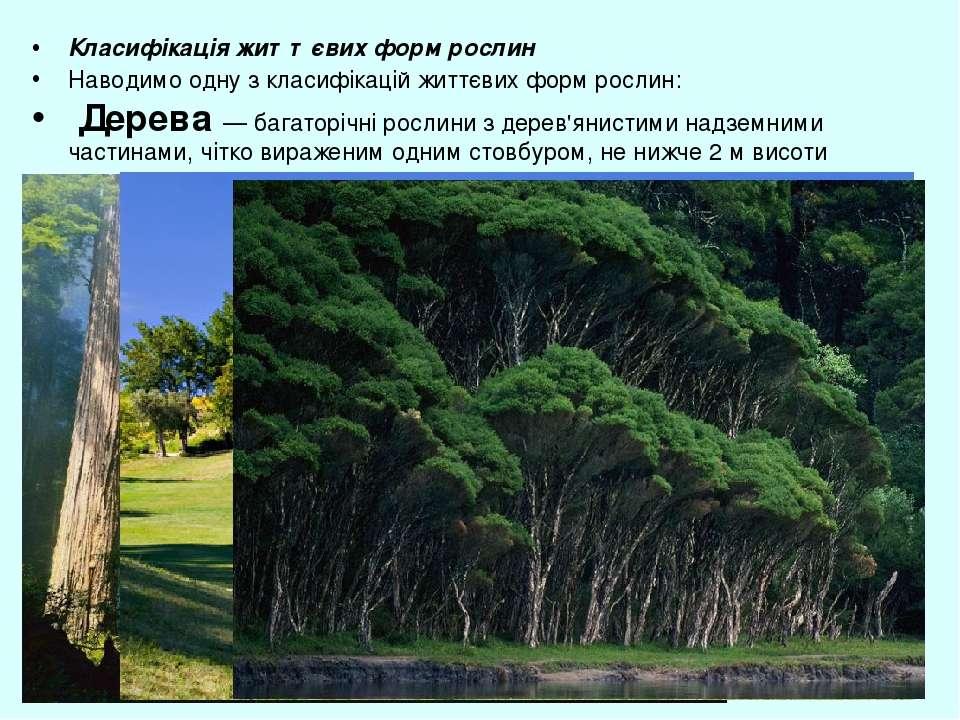 Класифікація життєвих форм рослин Наводимо одну з класифікацій життєвих форм ...