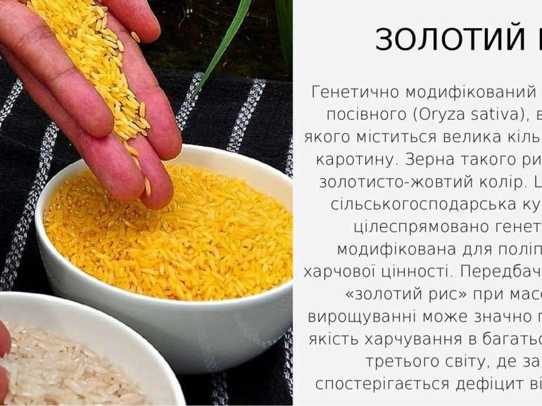 Генетично модифікований сорт рису посівного (Oryza sativa), в зернах якого мі...