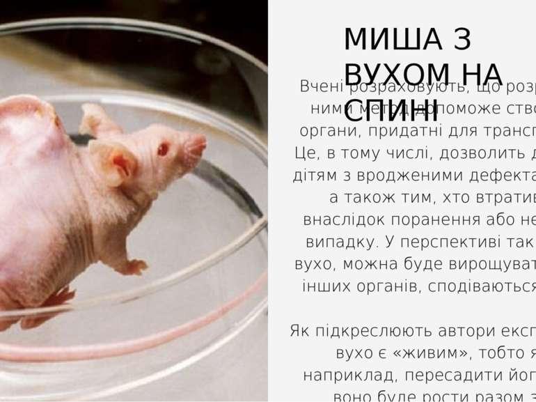 Вчені розраховують, що розроблений ними метод допоможе створювати органи, при...