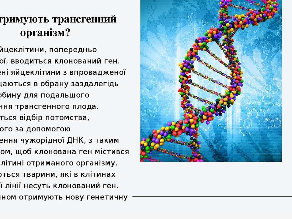 1)В ядро яйцеклітини, попередньо заплідненої, вводиться клонований ген. 2)Зап...