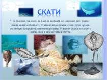 Ці тварини, так само, як і акули належать до хрящових риб. Скати мають деякі ...