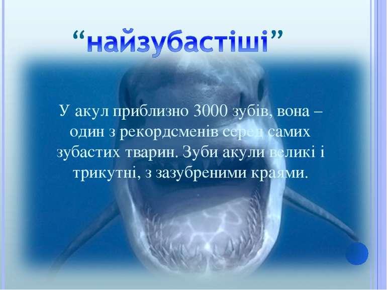 У акул приблизно 3000 зубів, вона – один з рекордсменів серед самих зубастих ...