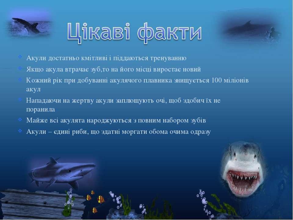 Акули достатньо кмітливі і піддаються тренуванню Якщо акула втрачає зуб,то на...