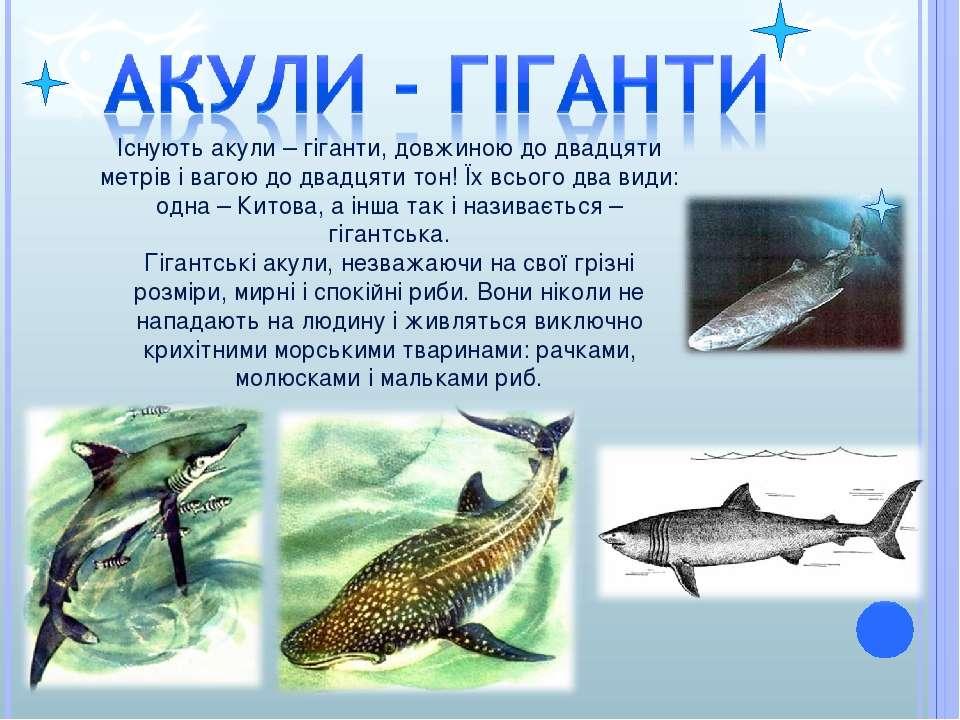 Існують акули – гіганти, довжиною до двадцяти метрів і вагою до двадцяти тон!...