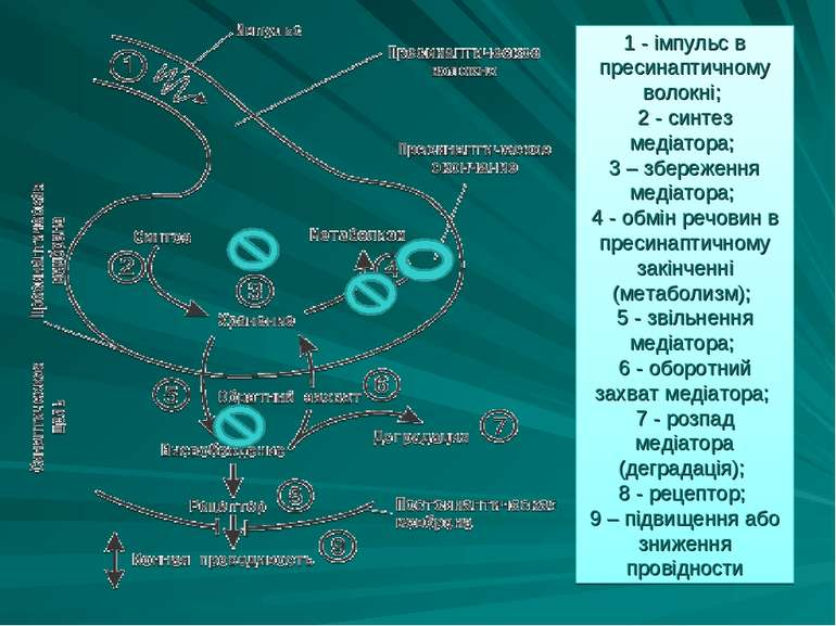 1 - імпульс в пресинаптичному волокні; 2 - синтез медіатора; 3 – збереження м...