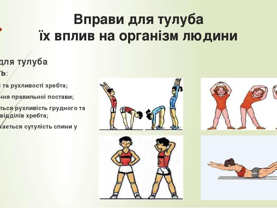 Вправи для тулуба їх вплив на організм людини Вправи для тулуба сприяють: Гну...