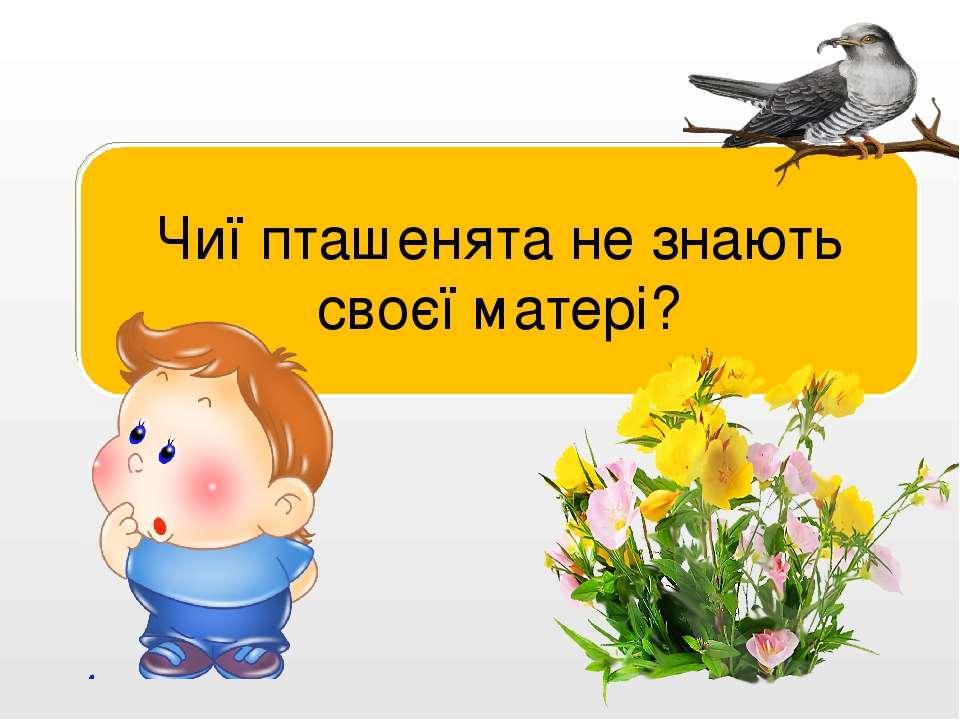 Пташенята зозулі. Чиї пташенята не знають своєї матері?