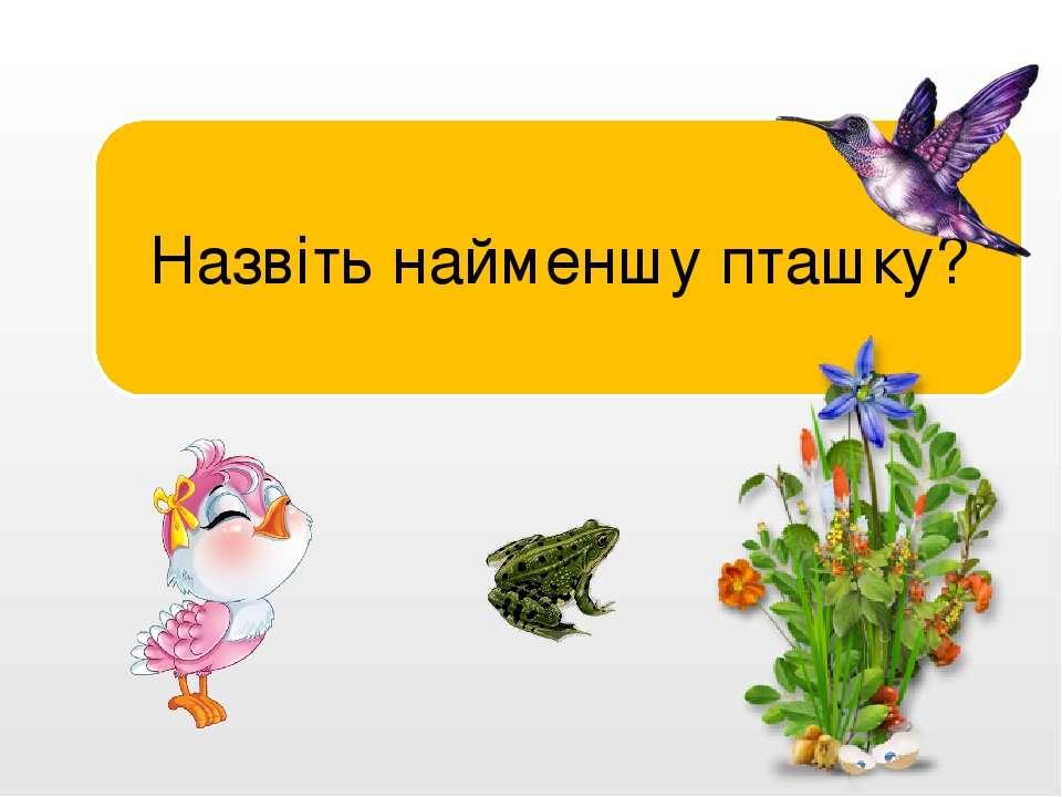Колібрі. Назвіть найменшу пташку?