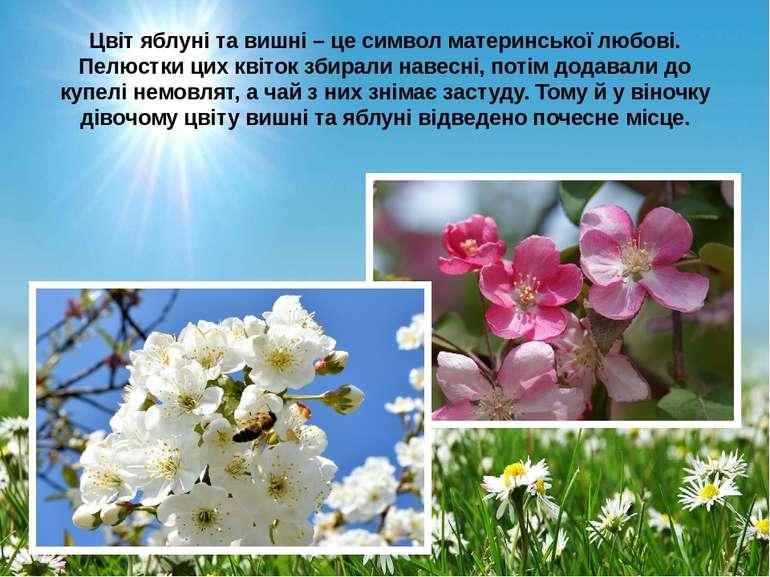 Цвіт яблуні та вишні – це символ материнської любові. Пелюстки цих квіток зби...