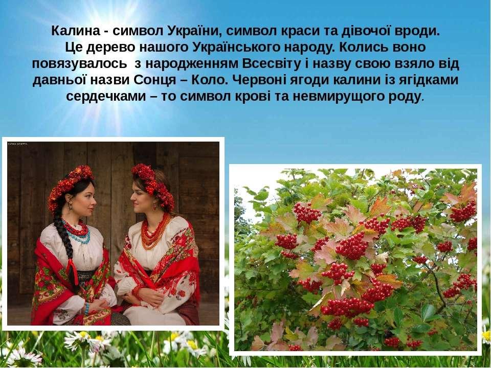 Калина - символ України, символ краси та дівочої вроди. Це дерево нашого Укра...
