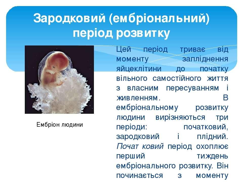 Цей період триває від моменту запліднення яйцеклітини до початку вільного сам...