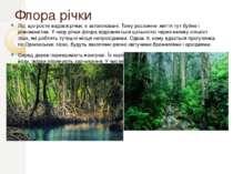 Флора річки Ліс, що росте вздовж річки, є затоплювані. Тому рослинне життя ту...