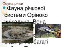 Фауна річки Фауна річкової системи Оріноко унікальна. Вона налічує близько 70...
