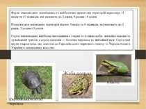 Фауна земноводних заповідника та найближчих прилеглих територій нараховує 11 ...