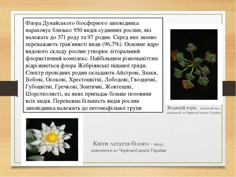 Флора Дунайського біосферного заповідника нараховує близько 950 видів судинни...