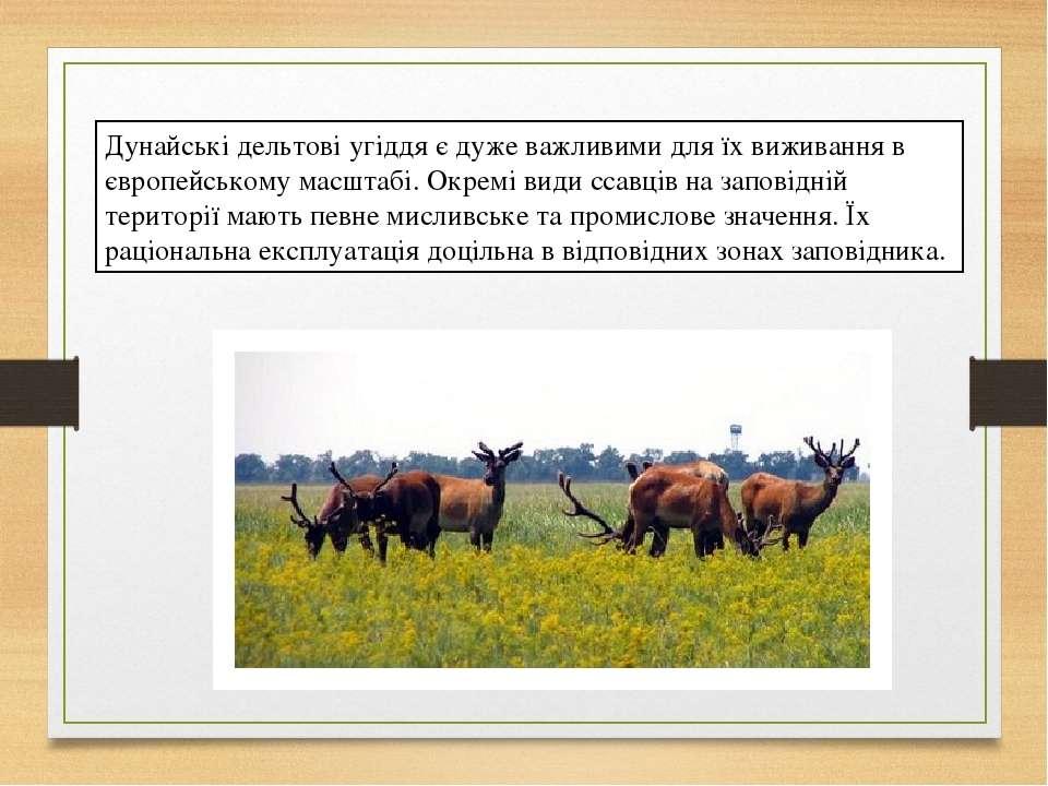 Дунайські дельтові угіддя є дуже важливими для їх виживання в європейському м...