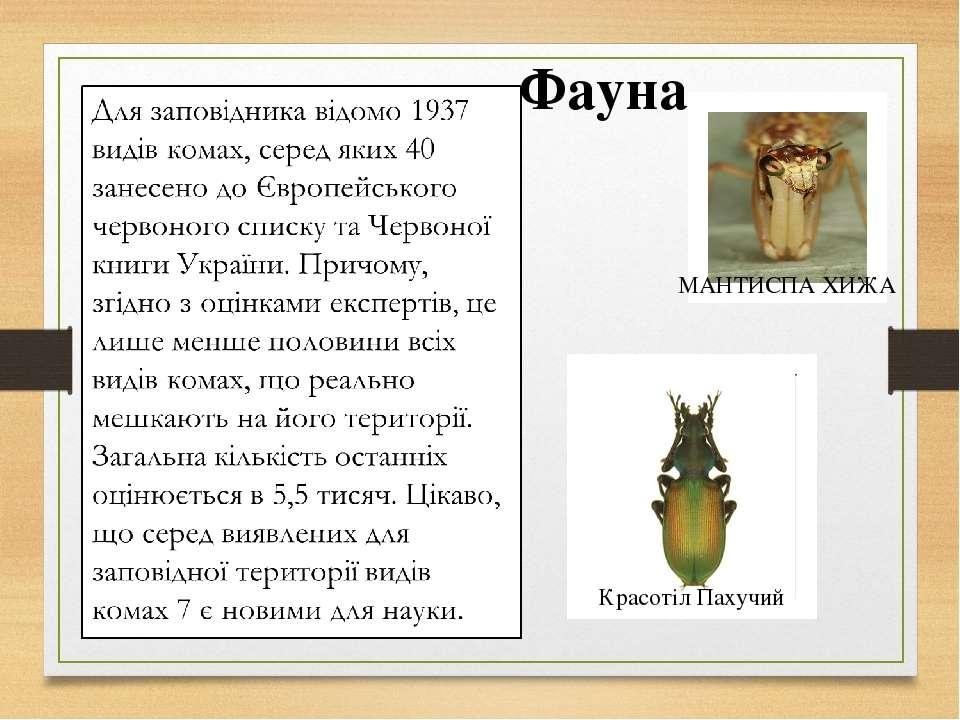 Фауна Красотіл Пахучий МАНТИСПА ХИЖА