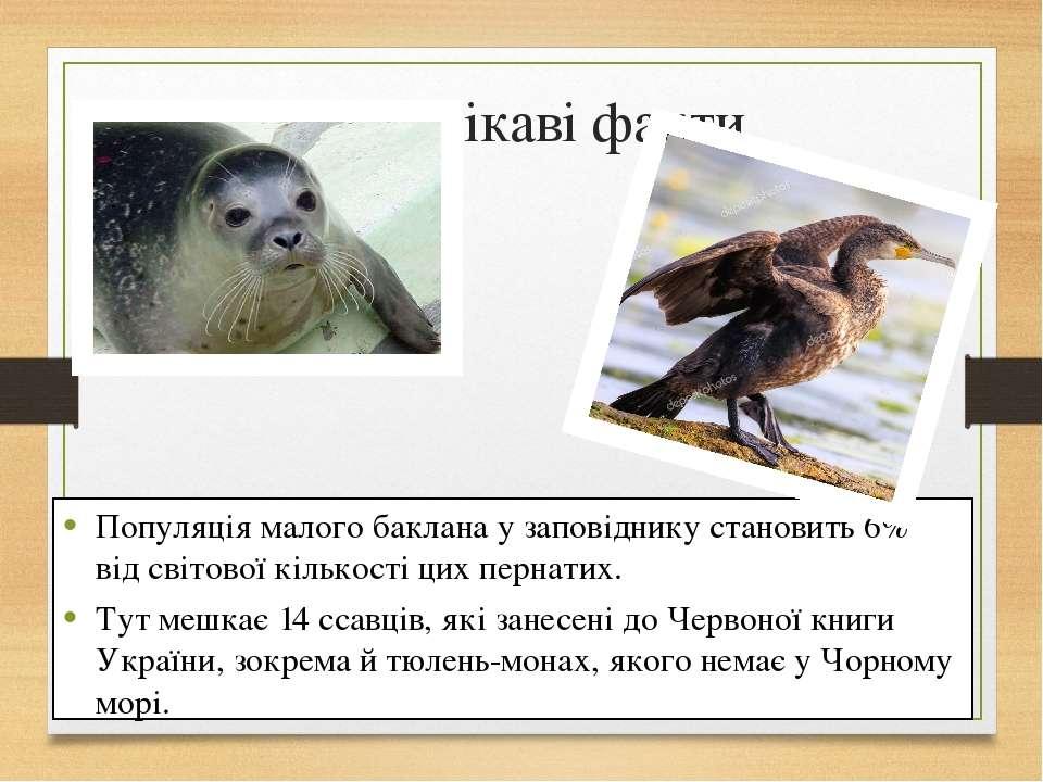 Цікаві факти Популяція малого баклана у заповіднику становить 6% від світової...