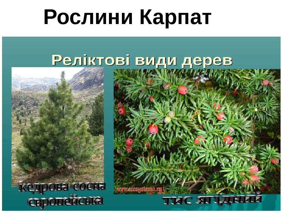 Рослини Карпат