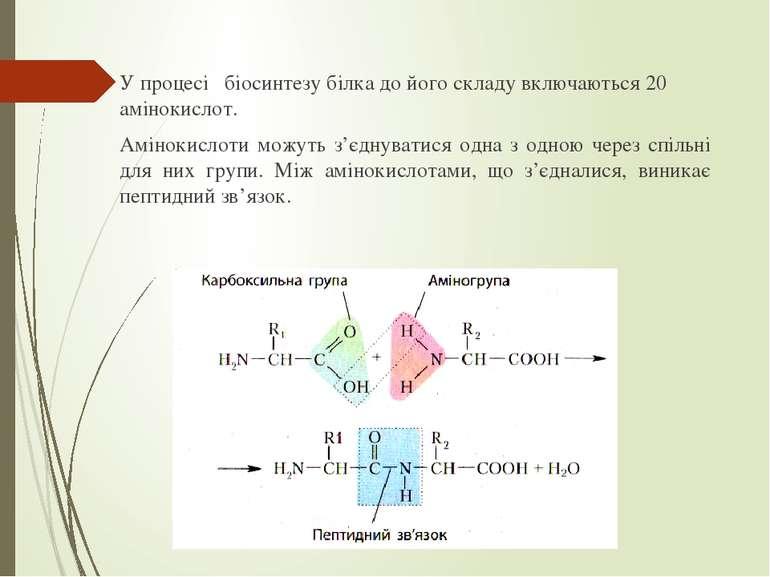 У процесі біосинтезу білка до його складу включаються 20 амінокислот. Аміноки...
