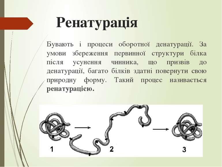 Ренатурація Бувають і процеси оборотної денатурації. За умови збереження перв...