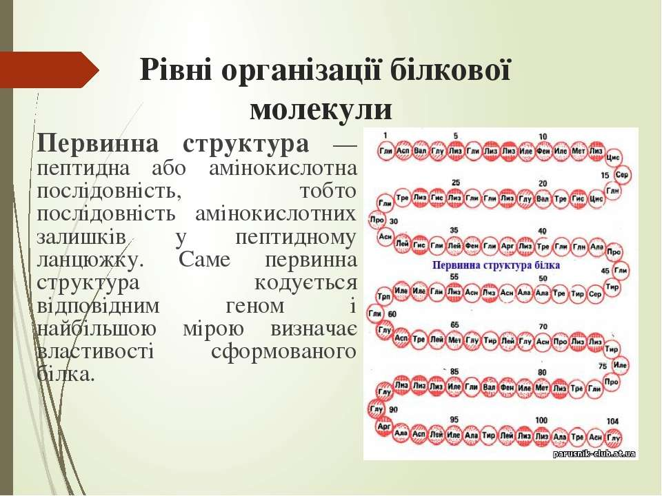 Рівні організації білкової молекули Первинна структура — пептидна або аміноки...