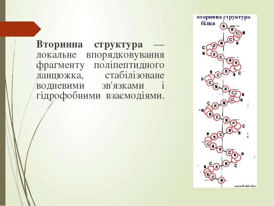 Вторинна структура — локальне впорядковування фрагменту поліпептидного ланцюж...