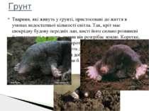 Тварини, які живуть у ґрунті, пристосовані до життя в умовах недостатньої кіл...