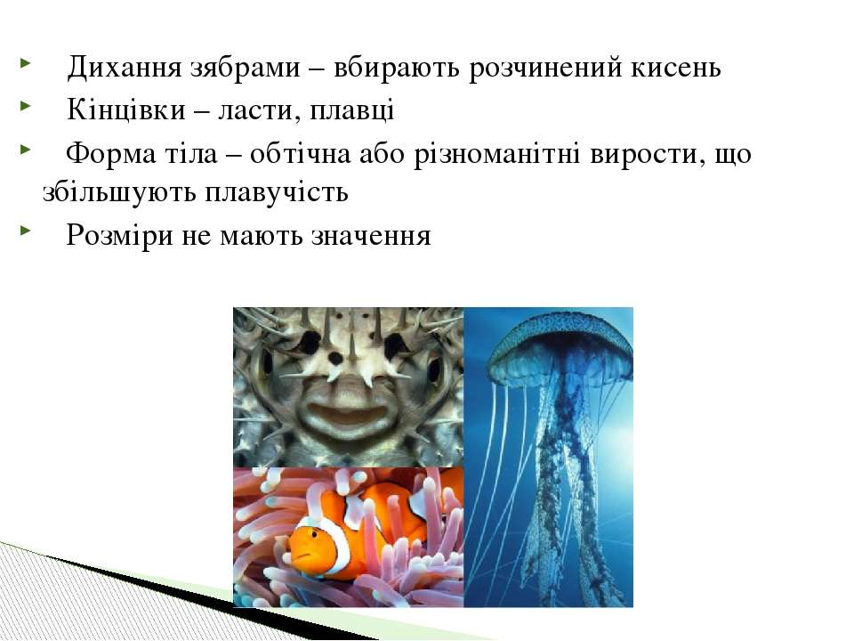 Дихання зябрами – вбирають розчинений кисень Кінцівки – ласти, плавці Форма т...