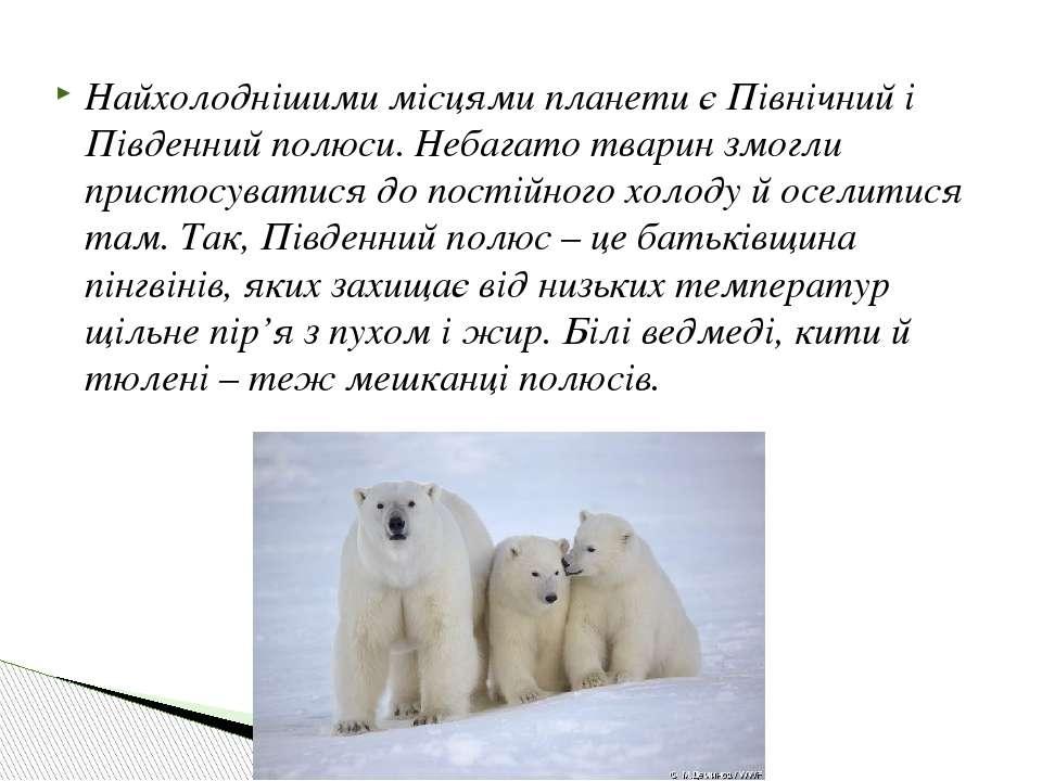 Найхолоднішими місцями планети є Північний і Південний полюси. Небагато твари...