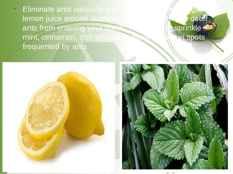 Eliminate ants naturally. Spray white distilled vinegar or lemon juice around...