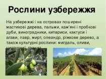 Рослини узбережжя На узбережжі і на островах поширені мастикові дерева, пальм...