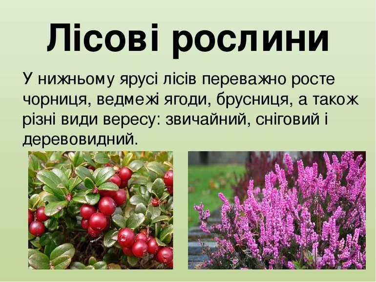Лісові рослини У нижньому ярусі лісів переважно росте чорниця, ведмежі ягоди,...