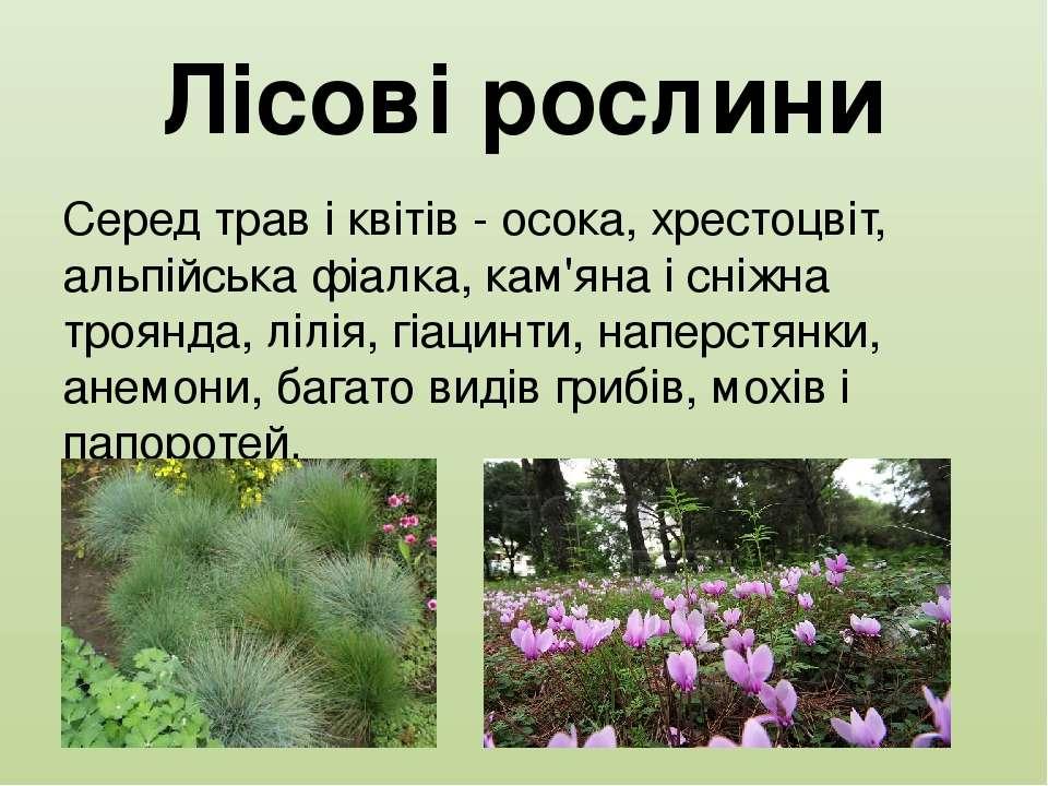 Лісові рослини Серед трав і квітів - осока, хрестоцвіт, альпійська фіалка, ка...