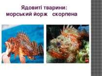 Ядовиті тварини: морський йорж скорпена