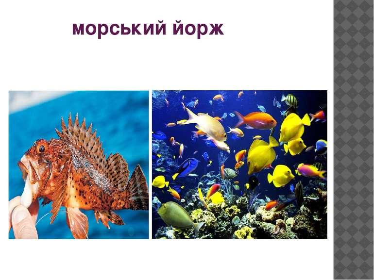 морський йорж