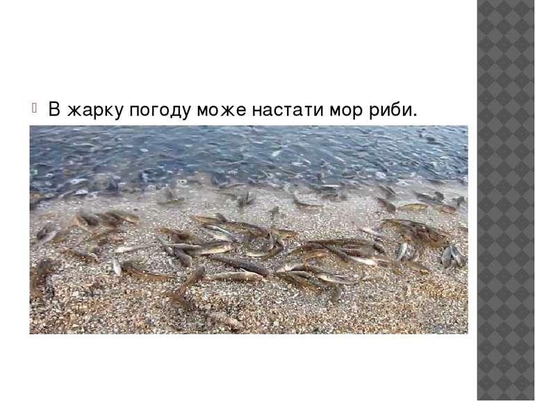 В жарку погоду може настати мор риби.