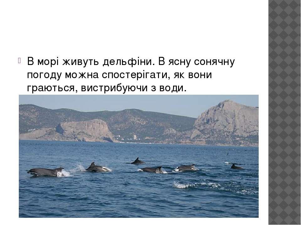 В морі живуть дельфіни. В ясну сонячну погоду можна спостерігати, як вони гра...
